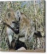 Out Of Africa  Hyena 2 Canvas Print