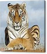 Out Of Africa Tiger 3 Canvas Print