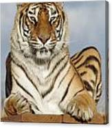 Out Of Africa Tiger 4 Canvas Print