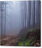 Out Of The Mist - Casper Mountain - Casper Wyoming Canvas Print