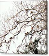 Out On A Limb First Snow Canvas Print