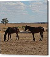 Outback Horses Canvas Print
