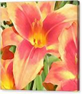 Outrageous Lilies Canvas Print