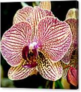 Outstanding Orchid Canvas Print