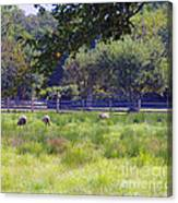 Over In The Meadow Canvas Print