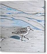 Overcast Day With Sanderlings Canvas Print