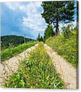 Overgrown Rural Path Up A Hill Canvas Print