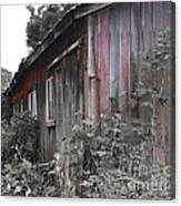 Overgrown Shed B/w Canvas Print