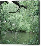 Overhanging Tree Canvas Print