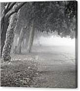 Overhanging Trees Canvas Print