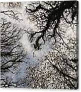 Overhead Trees In Exmoor, United Kingdom Canvas Print