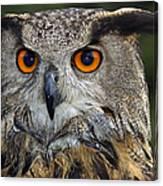 Owl Bubo Bubo Portrait Canvas Print