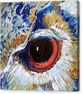 Owl Gaze Canvas Print