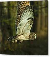 Owl In Flight Canvas Print