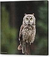 Owl In The Forest Visits Canvas Print