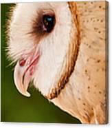 Owl Profile Canvas Print