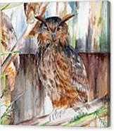 Owl Series - Owl 2 Canvas Print