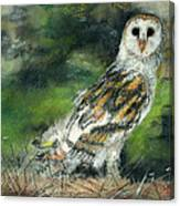 Owl Series - Owl 3 Canvas Print