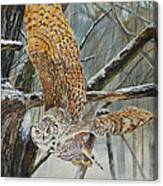 Owl Taking Off Canvas Print