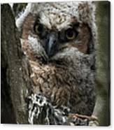 Owlet On The Watch Canvas Print