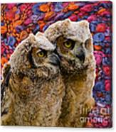 Owlets In Color Canvas Print
