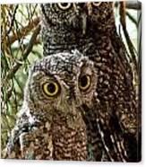 Owls From Amado Arizona Canvas Print