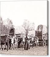 Ox-driven Wagon Freight Train C. 1887 Canvas Print