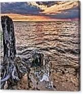 Oyster Bay Stump Sunset Canvas Print