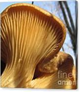 Oyster Mushroom Macro Canvas Print