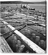 Oystering Industry Canvas Print