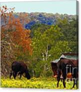 Ozark Cows Canvas Print