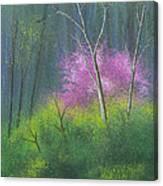 Ozark Redbud Canvas Print