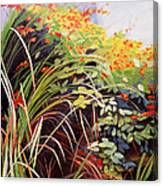 Pacific Crocosmia Canvas Print