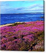 Pacific Grove California Coast Canvas Print