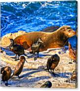Pacific Harbor Seal Canvas Print