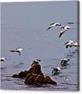 Pacific Landing Canvas Print
