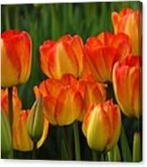 Pacific Northwest Tulips 1 Canvas Print