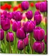 Pacific Northwest Tulips 4 Canvas Print