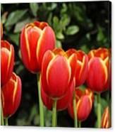 Pacific Northwest Tulips 6 Canvas Print