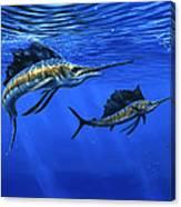 Pacific Sailfish Canvas Print