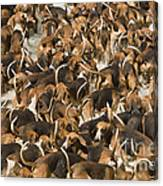 Pack Of Hound Dogs Canvas Print