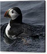 Paddling Puffin Canvas Print