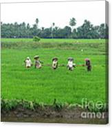 Paddy Field Workers Canvas Print