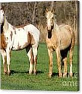 Paint And Palomino Mustang Canvas Print