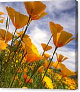 Paint The Desert With Poppies  Canvas Print