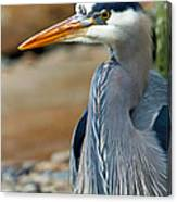 Painted Blue Heron Canvas Print