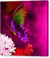 Painted Buterfly Canvas Print