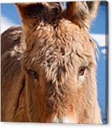 Painted Donkey 1 Canvas Print