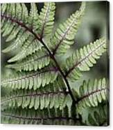 Painted Fern Canvas Print