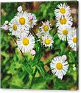 Painted Fleabane Canvas Print